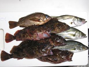 竹原漁港081102