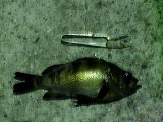 竹浦漁港0810071